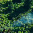 Royalty-Free Stock Photo: Climate gas pollution concept, smoke and forest