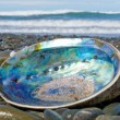 Shiny nacre of Paua shell, Abalone, washed ashore — Stock Photo