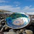 Stock Photo: Shiny nacre of Paushell, Abalone, washed ashore