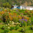 Stock Photo: Rural dream house in lush flowering natural garden
