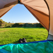Green meadow and forest seen thru open tent door — Stock Photo #10988049
