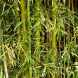 Green bamboo plants background texture pattern — Stock Photo #11130402