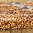 Stockpiled timber ready to be milled to lumber — Stock Photo