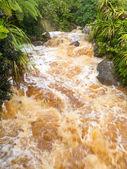 Flash flood in West Coast creek, NZ South Island — Stock Photo