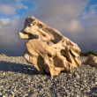 Naturally sculpted waterworn wood on pebble beach — Stock Photo #11392325