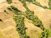 Network of green veins in dry grassland in NZ — Stock Photo