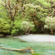 River in rainforest wilderness of Fiordland NP NZ — ストック写真