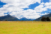 Sheep, peaks and Mt Aspiring NP, Southern Alps NZ — Stock Photo