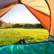 Stock Photo: Green meadow and forest seen thru open tent door