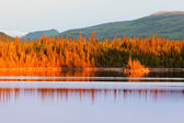 Sunset reflections on boreal forest lake in Yukon — Stock Photo