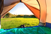 Green meadow and forest seen thru open tent door — Stock Photo