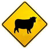 Attention Sheep Crossing Road Sign — Stock Photo