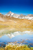 Grossglockner in Austria mirrored on alpine pond — Stock Photo