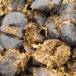 Close-up horse manure background texture pattern — Stock Photo