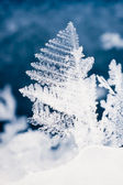 Close-up of real snowflake — Stock Photo