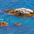 Snorkeller in ocean between rocks and bull kelp — Stock Photo