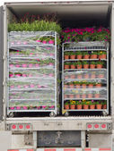 Open delivery truck loaded with pot plants pallets — Stock Photo