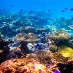 Under water world at Maldives — Stock Photo #11439617