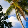 Coconut trees couple - Stock Photo