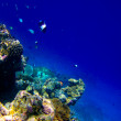 Stock Photo: Under water world at Maldives