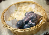 Young birds in the nest — Stock Photo
