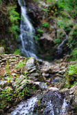 Cascade in black forest — Stock Photo