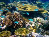 En el mundo de agua en maldivas — Foto de Stock