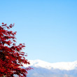 Red tree with Alps background - Zdjęcie stockowe