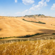 Country in Tuscany — Photo