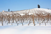 Tuscany: wineyard in winter — Stock Photo