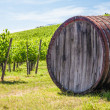 Tuscany wineyard - Stock Photo