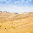 Country in Tuscany - Stock Photo