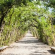 Boboli Gardens - Stock Photo