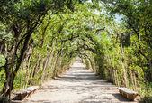 Jardins de Boboli — Fotografia Stock