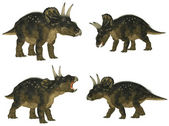Nedoceratops Pack — Stock Photo