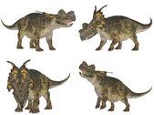 Achelousaurus Pack — Stock Photo