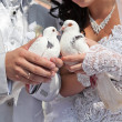 Wedding pigeons in hands of the groom and the bride — Stock Photo #11815198