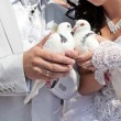 Wedding pigeons in hands of groom and bride — Stock Photo #11815202