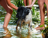 The dog is bathed in the river — Stock Photo