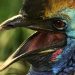 Stock Photo: Exotic bird close-up