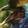 Exotic bird close-up — Stock Photo