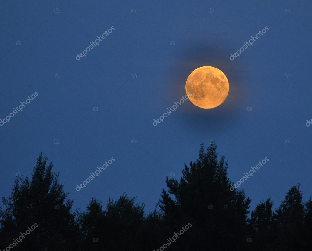 Full moon over forest  Stock Photo #11671535