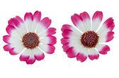 Hermosas flores de color rosa — Foto de Stock