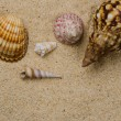 Seashells on the sand - Stock Photo