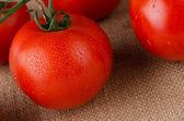 Vite di pomodorini — Foto Stock