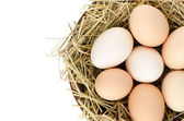 Eggs closeup — Stock Photo