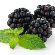 Fresh berry blackberry — Stock Photo #12367799
