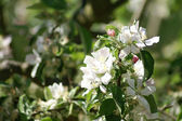 Trees bloom — Stock Photo