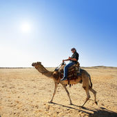 With the camel in the desert — Stock Photo