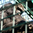 Monkey man in cage — Stock Photo #11414333